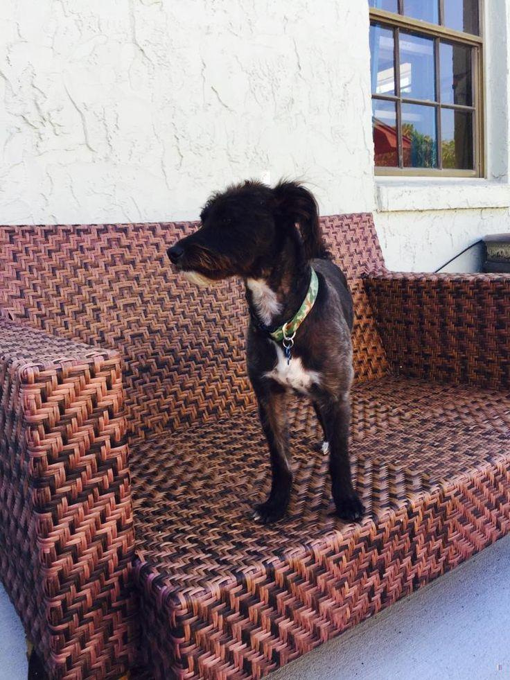 Lost Dog Male Lakeland, FL, USA 33812 Losing a dog
