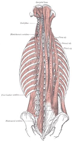 Now that we know that the spine is built by one vertebra above the other with it's healthy curves and properties, is time to talk about how ...
