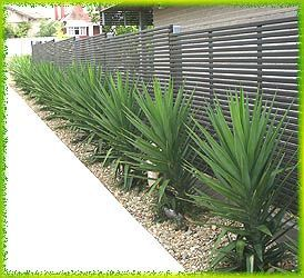 Garden Ideas – May have inherited a few Yucca 'Elephantipes'. Could be nice for screening in the backyard.
