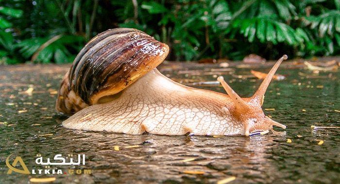 تفسير حلم رؤية الحلزون في المنام معنى الحلزون الأبيض في الحلم للعزباء والمتزوجة والحامل حلم الحلزون الحي رؤيا الحلزون الميت دلالة الحلزون المل Snail Animals