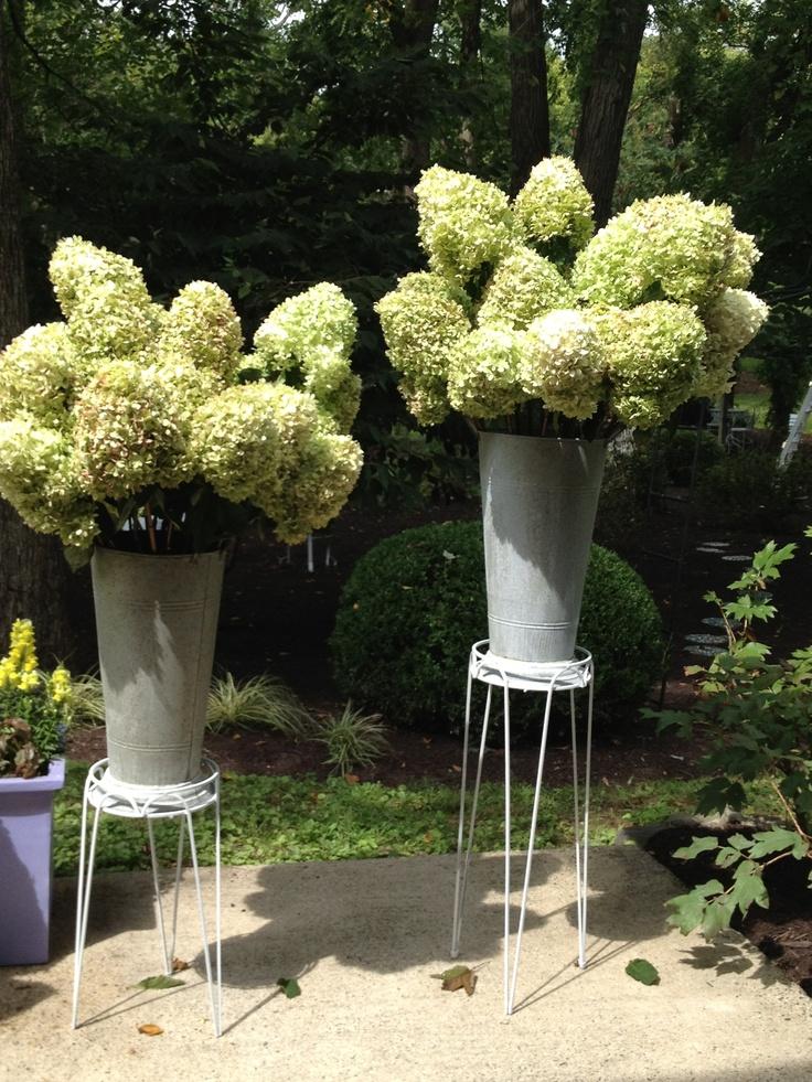 amazing hydrangea!: Gardens Decor, Amazing Hydrangeas