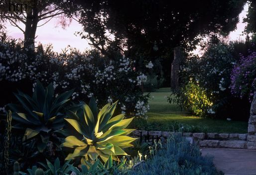 Harpur Garden Images :: anto24 Garden lit at night. Atmospheric light. Agave and Oleander in border. Lighting. Antonella Daroda, Capri. Jerry Harpur Please read our licence terms. All digital images must be destroyed unless otherwise agreed in writing. Photograph by: www.harpurgardenlibrary.com Contact: Harpur Garden Library 44 Roxwell Road Chelmsford Essex CM1 2NB, UK