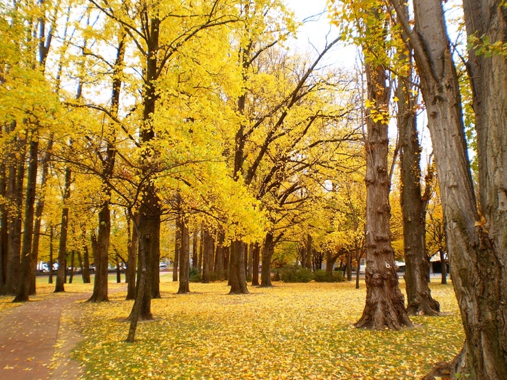 Autumn in the park, in Australia's capital, Canberra.