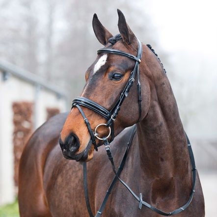 Dark Horse Tack is proud to offer... This Horze Prague Snaffle Bridle is made of quality leather with a glossy brow band and extra wide glossy noseband. Silver buckles shine against the soft leather f