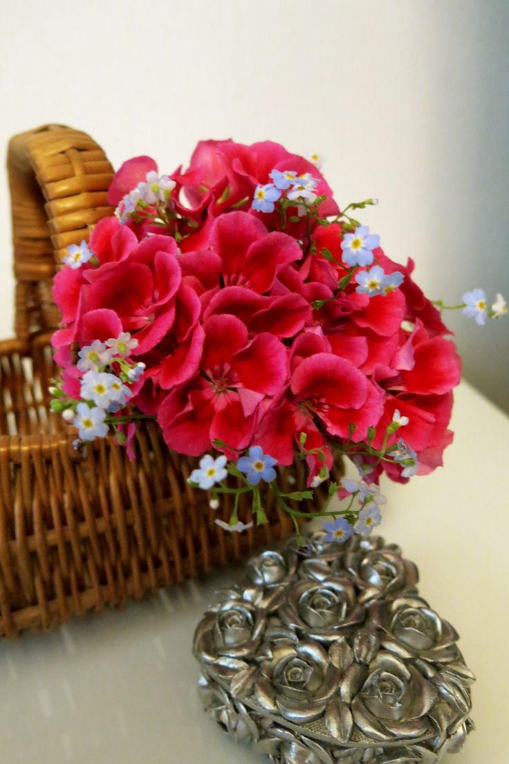 Pelargoniat ja lemmikit kukkakorissa