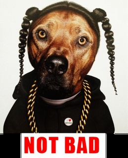 "Snoop ""Dog"" :Not bad:  Part 3 of 3Doggie Dogg, Halloween Costumes, Snoop Dogs, Doggie Dogs, Snoop Doggie, Funny Stuff, Snoopdogg, Animal, Dogg Dogs"
