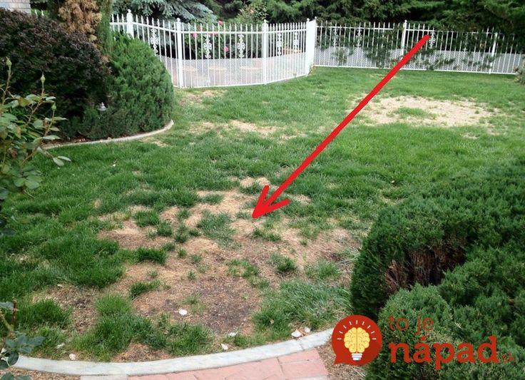 Tiež sa snažíte ako viete, ale na niektorých miestach na vašom pozemku tráva jednoducho nerastie tak, ako by ste chceli? Uschnuté plochy, alebo miesta, na ktorých rastie veľmi riedko a pomaly.