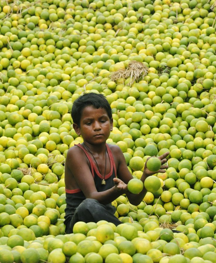 Swimming in lemons at the market, Kolkata, India   VOA News