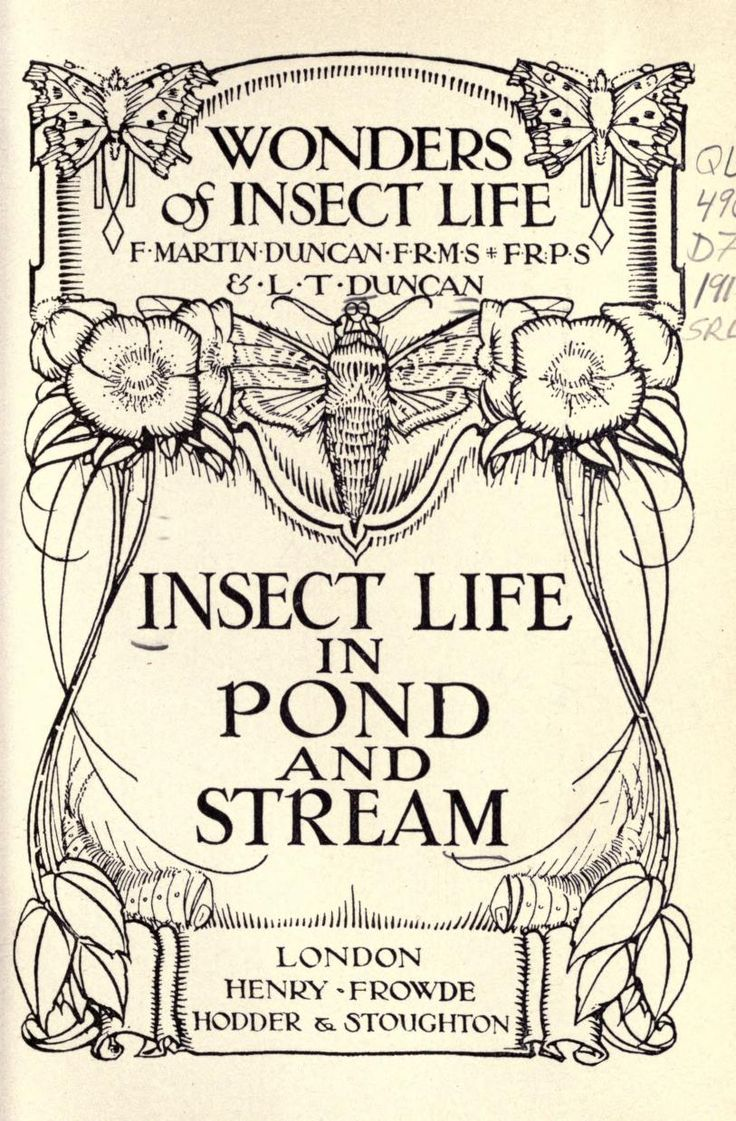 Insect life in pond and stream