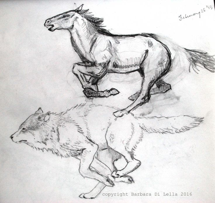 running horse and wolf drawings #runninghorsedrawing #wolfdrawing #handdrawn #pencildrawing #pencilsketch #wildandfree