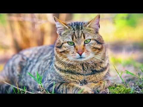 Zvířata Zvuky zvířat - YouTube