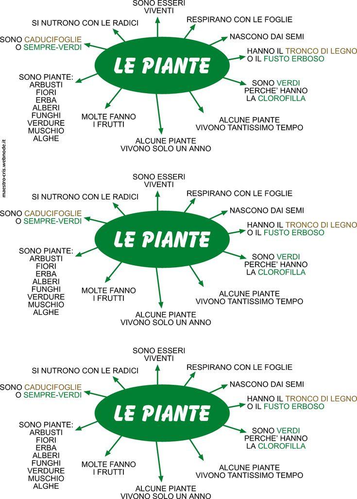 LE PIANTE.jpg