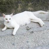 Gestation du chat