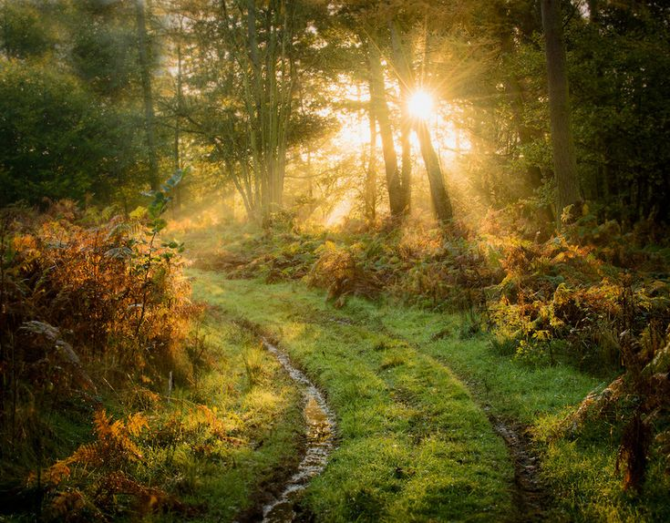 Newlands Forrest, Cannock  - Imgur