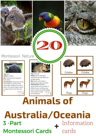 Animals: Dingo, Echidna, Kangaroo, Crocodile, Rainbow Lorikeet, Frilled Neck Lizard, Cassowary, Koala, Quoll, Eastern Brown Snake, Possum, Bluebottle Jellyfish, Fairy Penguin, Tasmanian Devil, Kookaburra, Wombat, Shark, Platypus, Blue Tongue LizardAnimals of Australia / Oceania 3-part Montessori cards- Montessori Nature Blog