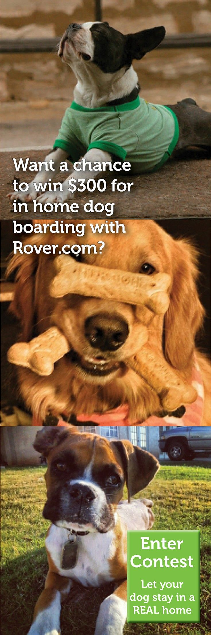 Want a chance to win $300 for in-home dog boarding with Rover.com?