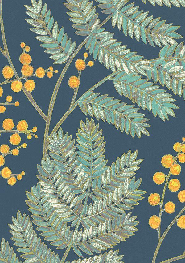 illustration with Mimosa on Behance