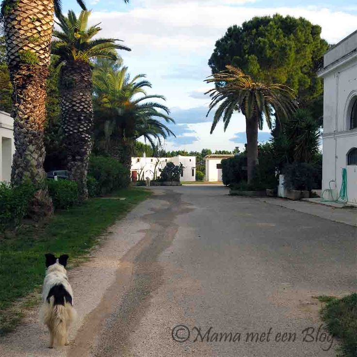 Vakantie Agriturismo  in Italië met kinderen https://mamameteenblog.nl/agriturismo-itali/