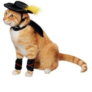 Puss-in-Boots Halloween Costume for Cats lololololololol~I'm not usually the one to dress up my animals, but this is funny!