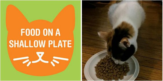 If your cat eats too quickly and then throws up, place her food in a shallow plate. | 26 Hacks That Will Make Any Cat Owner's Life Easier