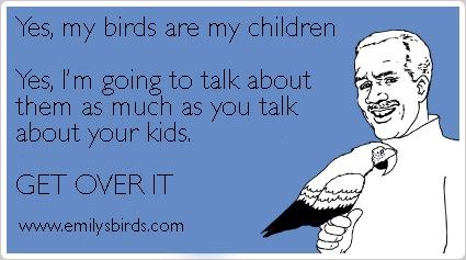 A fun parrot meme