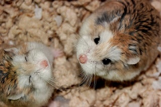 This is a good day!Animal Lovers, Animal Lg, Happy Hamsters, Hamsters Trail, Dwarfs Hamsters, Eternity Sunshine, Animal Gallery, Adorable Fuzzy, Adorable Animal
