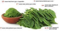 Estudo mostra que esta planta pode curar vários tipos de câncer, incluindo ovário, fígado, pele e pulmão | Cura pela Natureza
