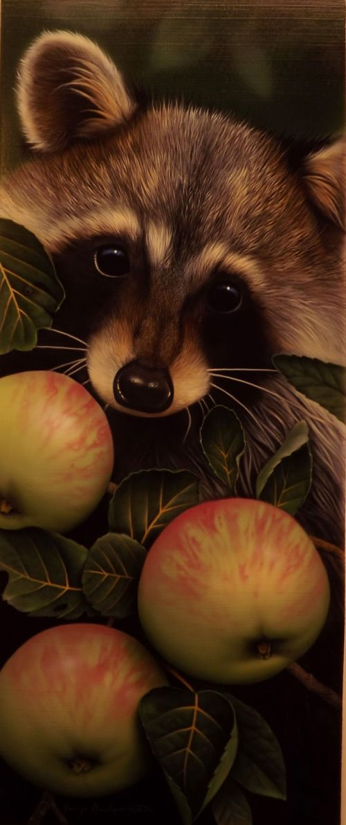 Jerry Gadamus | Raccoon With Apples