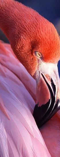 Rio Lagartos, Yuc.Mx | Santuario del flamenco rosa....Que buena Pesca!!!!