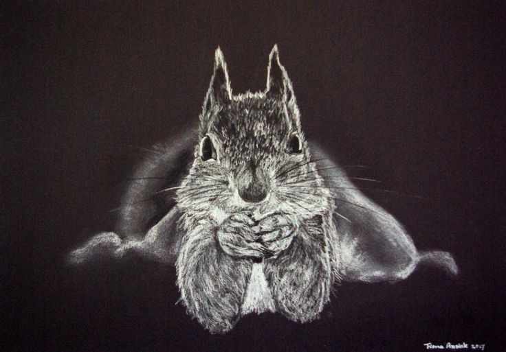 Munching squirrel. White charcoal on black paper. Made by Fiona Ansink