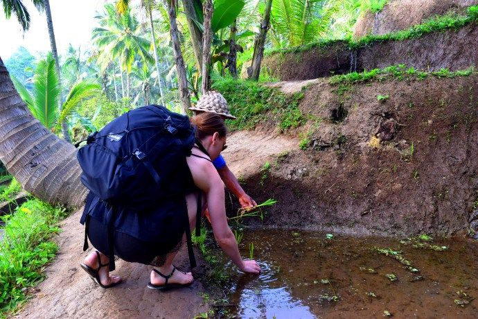 Around Ubud: Tegalalang Rice Terraces #Gotripit #travelblog #Bali #Ubud # Tegalalang #Riceterraces #Ricefield