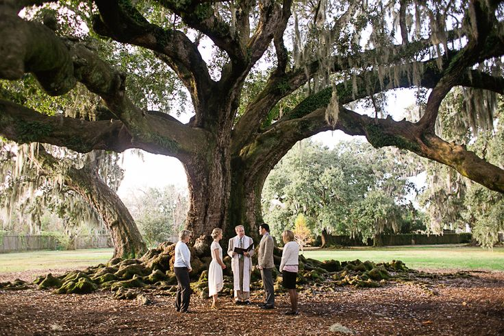 Tree Of Life. New Orleans, LA. (( Oldest tree in the city. Free Venue for weddings))