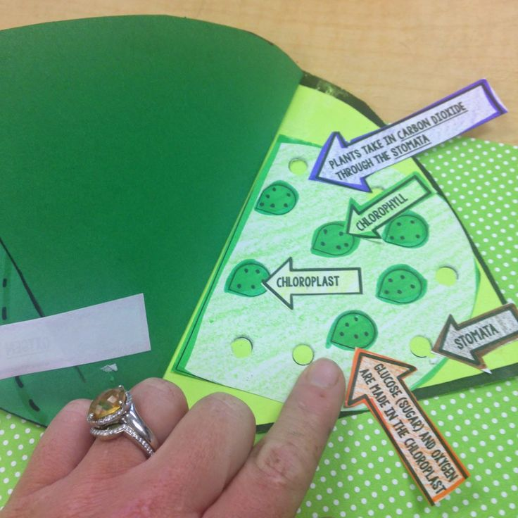 Photosynthesis Craftivity-  Students visually show the process of photosynthesis…