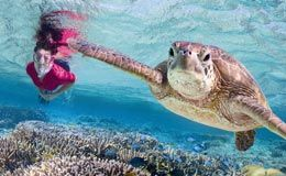 Discover the Turtles - It's Turtle Season Now, Don't miss out!