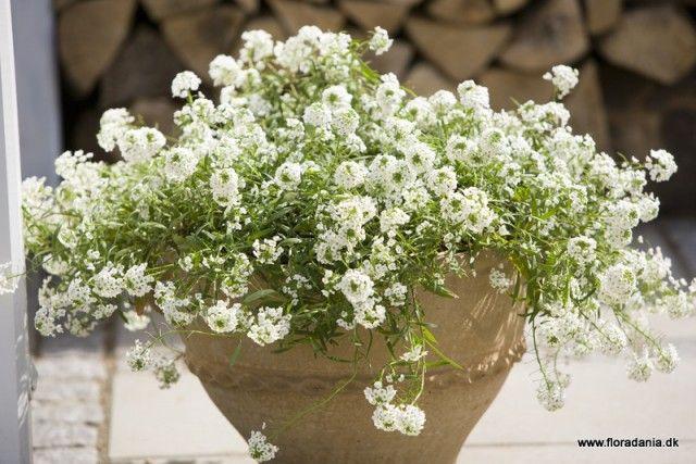 Kwiaty Balkonowe Najladniejsze Rosliny Container Gardening Garden Plants