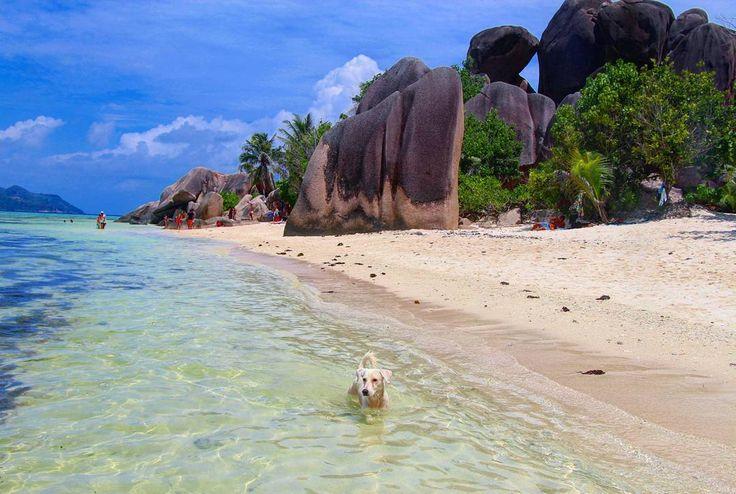 Stranden som er blitt kåret til verdens vakreste i mange reisemagasiner, Sølvstranda.😎⛱️🌴 Med søte hunder som badet hele dagen og prøvde å fange fisker. 😊 🐶#seyschelles #paradise #beach #beachlife #tropicalholiday #ansedargent #ladigue #holiday #travel #happytraveler #sea #seaside #dog #swimmingdog