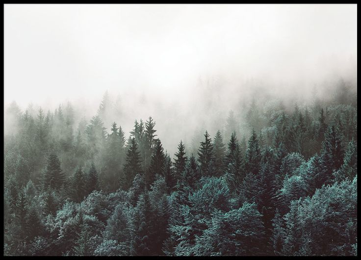 Beautiful print of nature