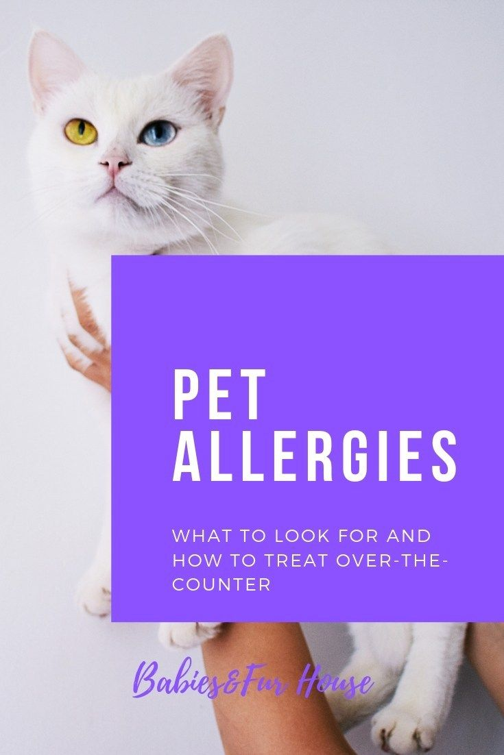 Pet Allergies Pet Allergies Allergies Itchy Ears