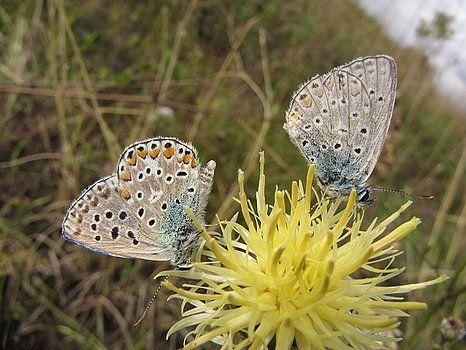 Butterflies by Gianalbert Oliv