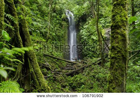 Waterfall At Cloud Forest, La Amistad International Park, Chiriqui , Costa rica & Panama...