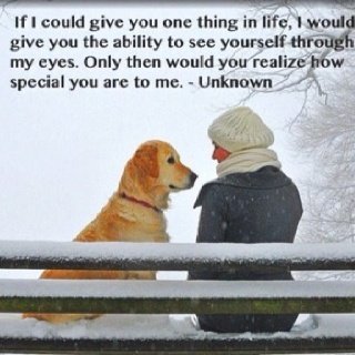 Puppies, Best Friends, Quotes, Pets, Dogs Lovers, Animal, Wall Photos, Golden Retriever