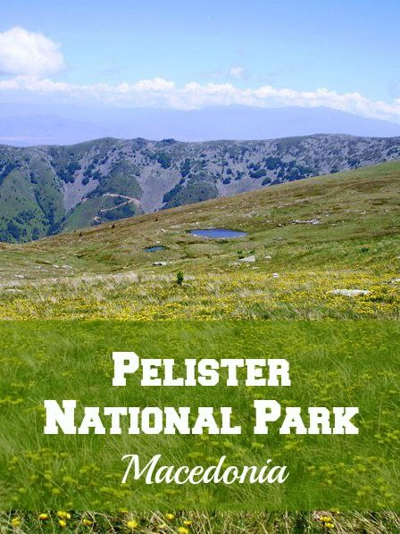 Pelister National Park is one of three national parks, which are located in Macedonia. Most famous treks are hiking to the highest peak of Mount Pelister and Pelisters lakes, also known as Pelisters eyes or Pelisterski oci.