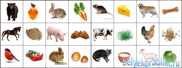 Картинки животных и что они едят напечатать