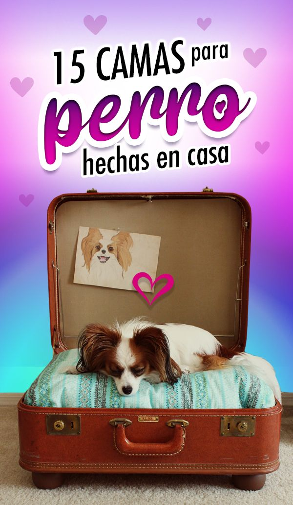 ¡A tu perrito le gusta esto! Suitcase, Diy, Funny Dogs, How To Make, Bed Ideas, Dog Beds, Suitcases, Bricolage, Do It Yourself