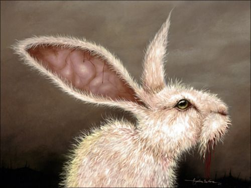 Angelina Wrona.   Distinguished hare in deep thought