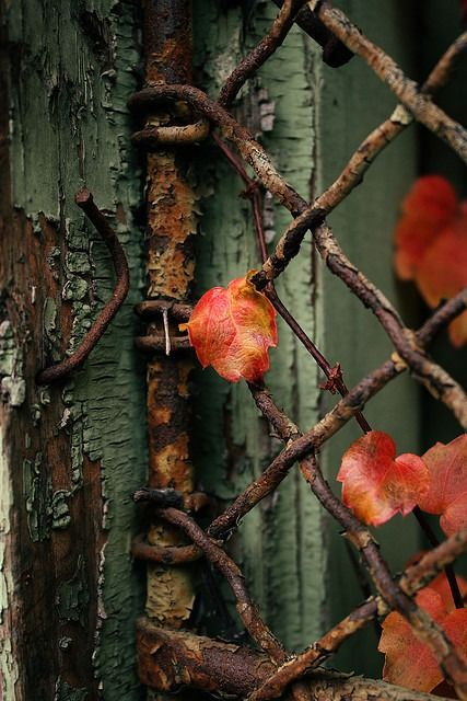 """~ Autumn ~ """"An autumn garden has a sadness when the sun is not shining..."""" ~ Francis Brett Young, Cold Harbour"""