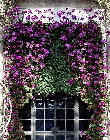 Beautiful window display of purple flowers