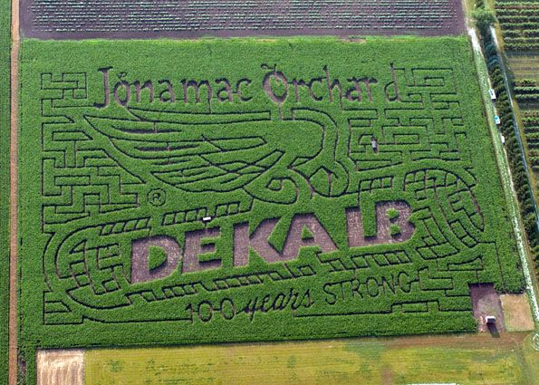 Corn Lettering From Space