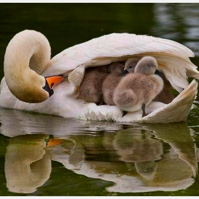 Nothing Better than a Mother's Love.: Mothers Love, Animal Photo, Shelters, Wings, Boats, Baby, Feathers, Families, So Sweet