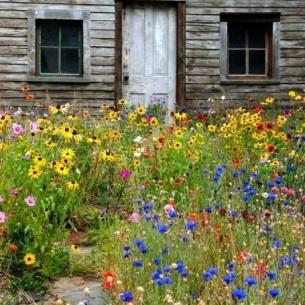 wildflower yard - better than lawn !!!